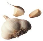 garlic.jpg (5332 bytes)